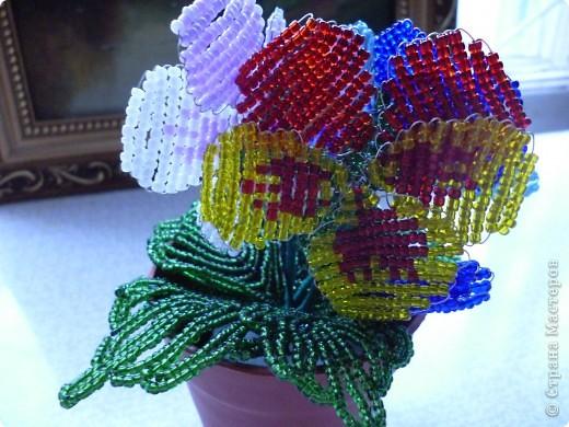 Вот таие яркие поучиись цветы фото 3