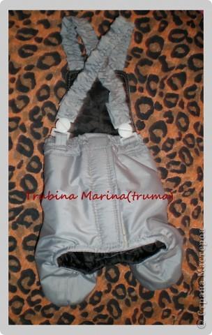 Куртка и штанишки для йорка с мехом.юКуртка из лаке,штанишки на синтепоне и плащевой ткани таслан. фото 3