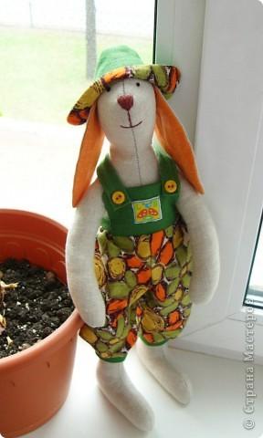 И еще один заяц фото 1