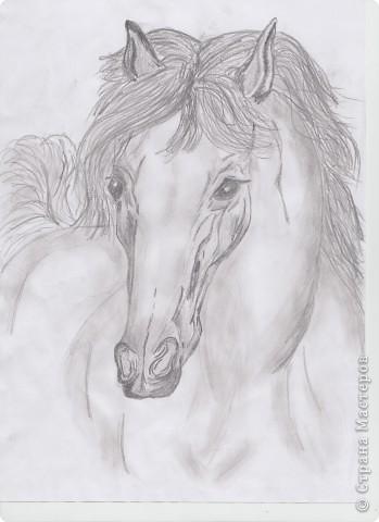 Мои лошади фото 2