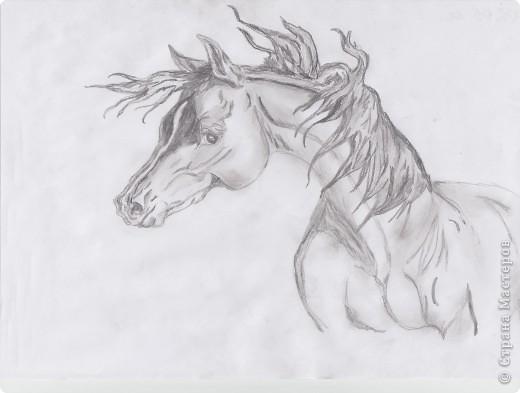 Мои лошади фото 1