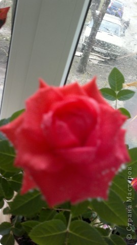 Мои цветы фото 13