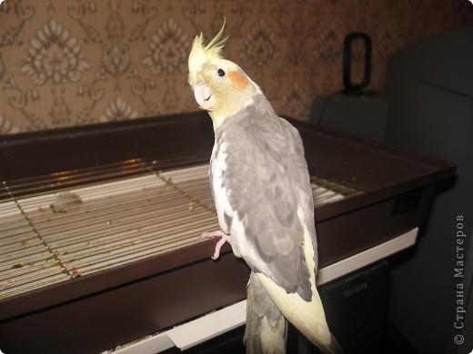 Мы решили тоже поучаствовать в конкурсе Юли и Миши. Сейчас у нас птичек дома нет, а когда-то жили и очень любили фото 7