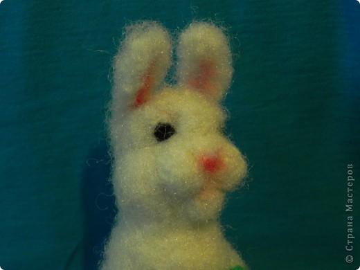 Недавно у меня появился кролик зовут его: Ушастик. Его рост всего:13см и 2мм(от начала лапок до кончиков ушек)Длина морковочки около:3см 5 мм. фото 5