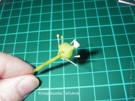 В Стране Мастеров этот цветок уже  произрастал http://stranamasterov.ru/node/166328, но я решилась выложить свою версию фото 18
