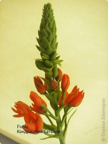 В Стране Мастеров этот цветок уже  произрастал http://stranamasterov.ru/node/166328, но я решилась выложить свою версию фото 1