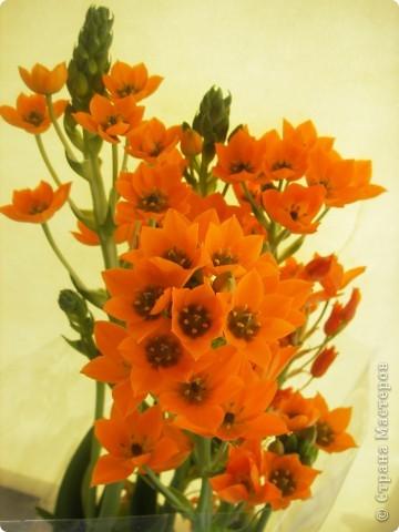 В Стране Мастеров этот цветок уже  произрастал http://stranamasterov.ru/node/166328, но я решилась выложить свою версию фото 25