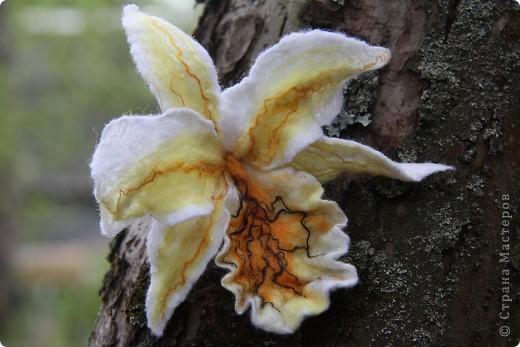 Орхидея Каттлея фото 5