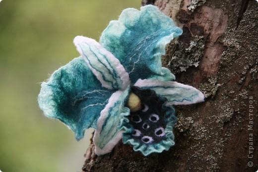Орхидея Каттлея фото 4