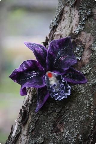 Орхидея Каттлея фото 7