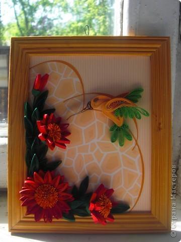 колибри фото 1