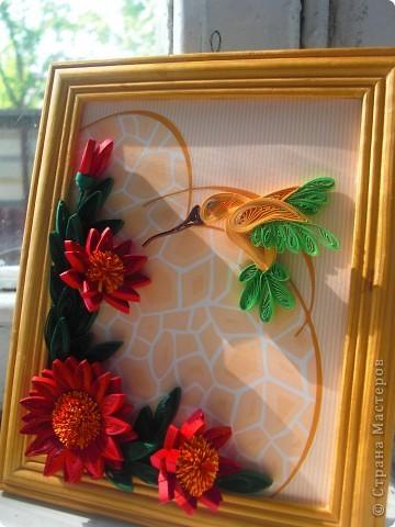 колибри фото 2