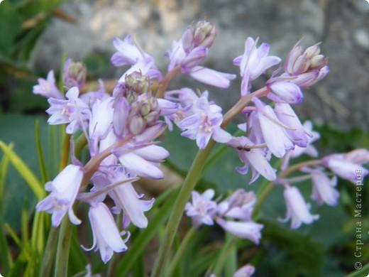 Весенние цветочки фото 49