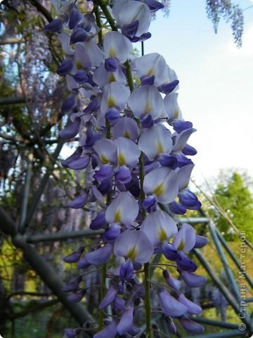 Весенние цветочки фото 40