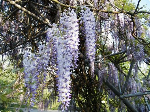 Весенние цветочки фото 38