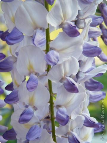 Весенние цветочки фото 41