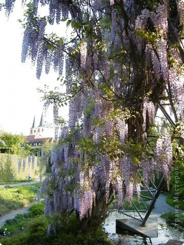 Весенние цветочки фото 39