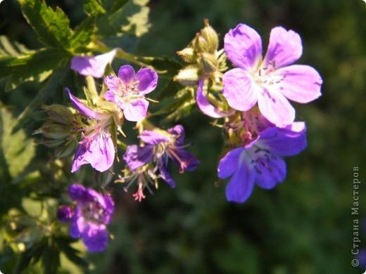 Весенние цветочки фото 50