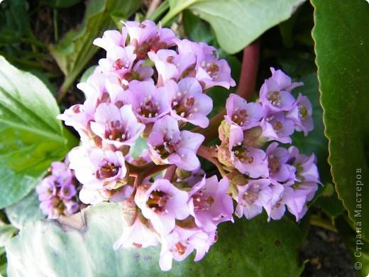 Весенние цветочки фото 45
