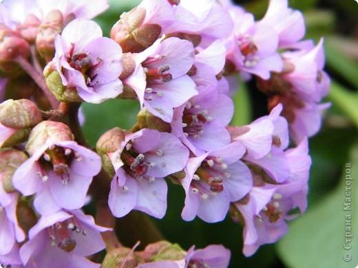 Весенние цветочки фото 46
