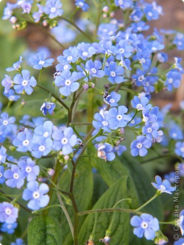 Весенние цветочки фото 43