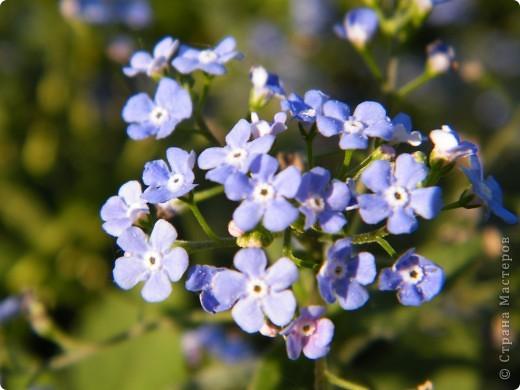 Весенние цветочки фото 44
