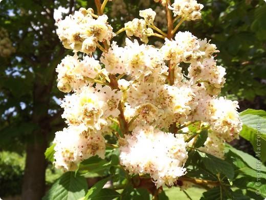 Весенние цветочки фото 35