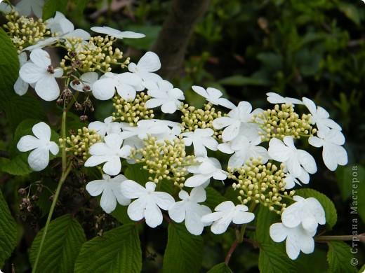 Весенние цветочки фото 2