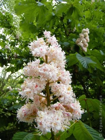 Весенние цветочки фото 3