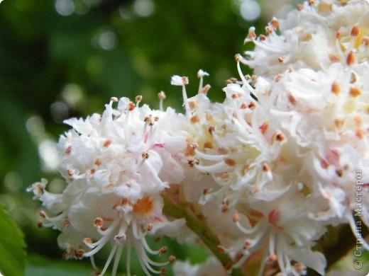Весенние цветочки фото 4