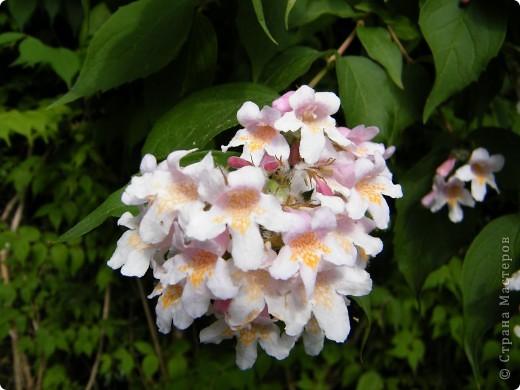 Весенние цветочки фото 47