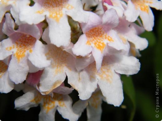 Весенние цветочки фото 48