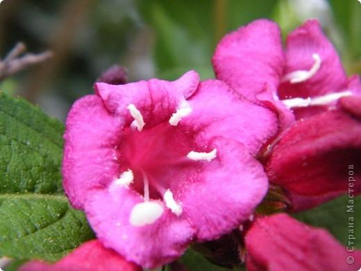 Весенние цветочки фото 9