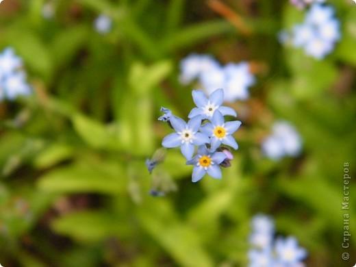 Весенние цветочки фото 11