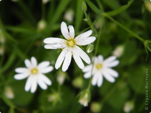 Весенние цветочки фото 12