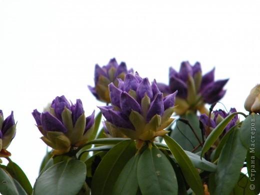 Весенние цветочки фото 14