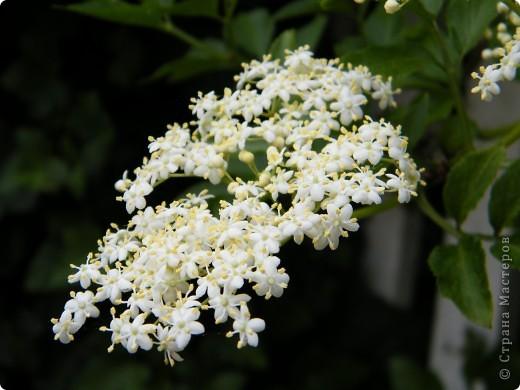 Весенние цветочки фото 15