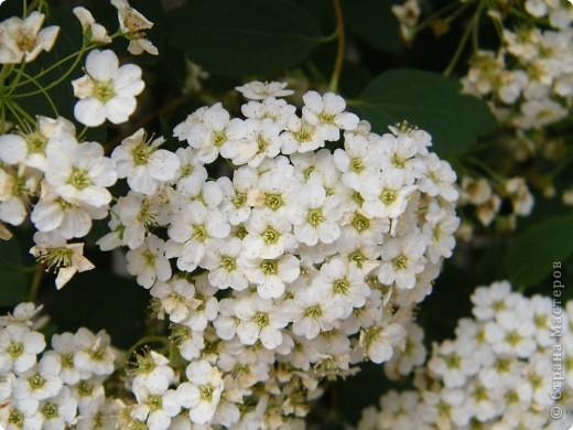 Весенние цветочки фото 17