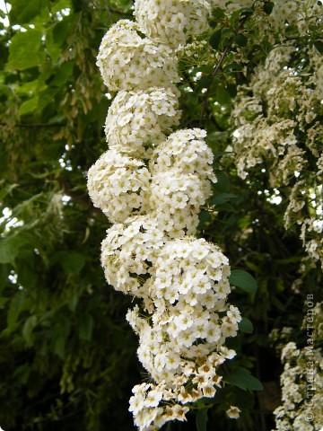 Весенние цветочки фото 16
