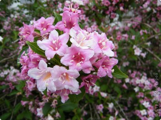 Весенние цветочки фото 19