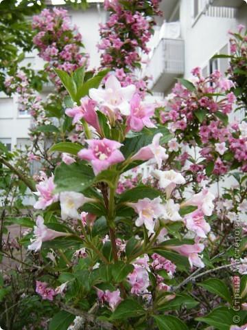 Весенние цветочки фото 20