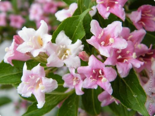 Весенние цветочки фото 21