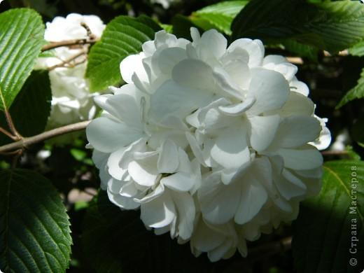 Весенние цветочки фото 22