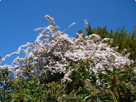Весенние цветочки фото 23