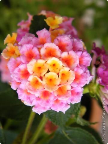 Весенние цветочки фото 24