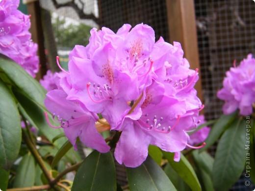 Весенние цветочки фото 25