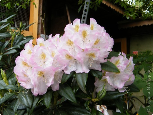 Весенние цветочки фото 26