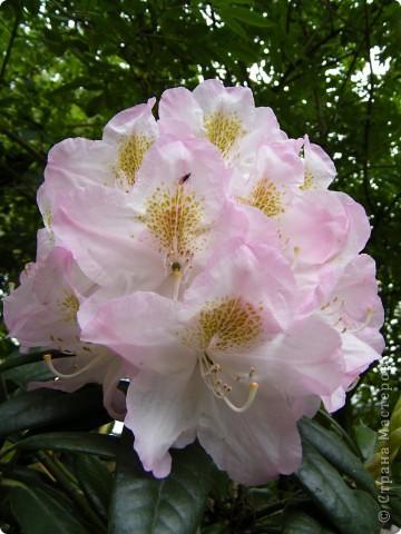 Весенние цветочки фото 27