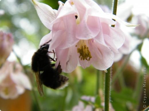 Весенние цветочки фото 29