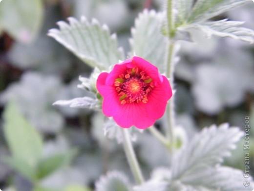 Весенние цветочки фото 32